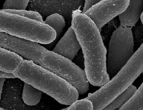 Alimentación, microbiota y regulación de la inflamación. 1ª parte
