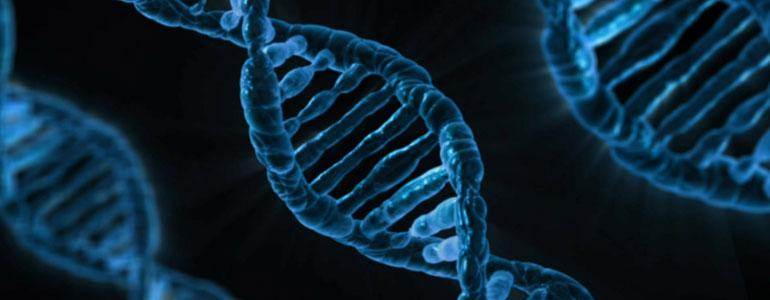 Resultado de imaxes para: genes